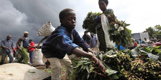 manioc-virus-ebola-securite-alimentaire-afrique.jpg
